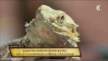 Fort Boyard 2017 : Pas d'émission le 5 août, retour le 12 août à 20h55 sur France 2 ! (version 3)