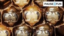 Un timelapse impressionnant de la naissance des abeilles