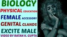 female accessory genital glands