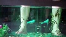 Pied poisson affamé docteur des poissons tout en en voyageant autour au sud-est Asie Jai arrivé