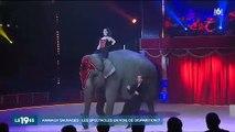 Faut-il interdire les spectacles avec des animaux sauvages ? Les défenseurs des animaux haussent le ton
