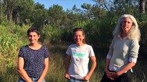Protégeons la biodiversité en Ria d'Etel ! Chantier nature du 28 août au 1er septembre 2017