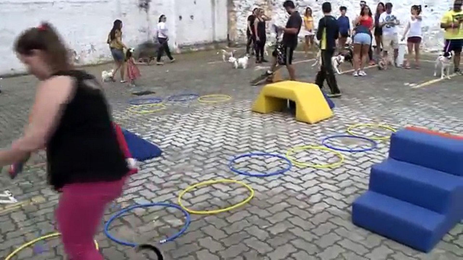 TREINO ANIMAL Crossfit que une cachorros e seus donos é nova aposta em Salvador
