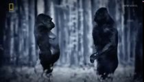 REAL BIGFOOT ENCOUNTERS - NATIONAL GEOGRAPHIC DOCUMENTARY - Discovery Paranormal Supernatural Documentaries (full documentary)