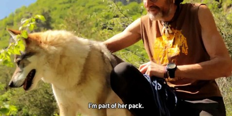Living with a wolf  Who s learning from who