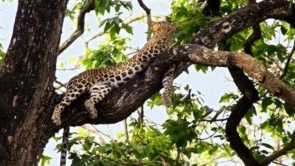 Karnataka Wildlife and Nature Video- Jaya Hai Kannada Thaye