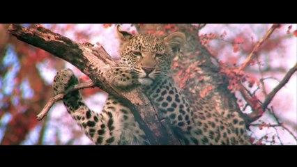 Samsara (UN COP21 VERSION)- Ricky Kej Featuring Amitabh Bachchan, Soweto Gospel Choir