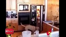 PETS & ANIMALS and their funniest moments- Top Funny Pets