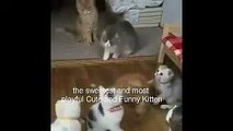 Funny Cats Compilation Most See Funny Cat Videos Ever -  Action family cats