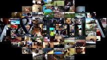 Funny Cats And Rats - Cats Vs Rats - Rats Attacking Cats Compilation