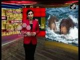 Sri lanka News - Sri Lankan navy, wildlife officials rescue two elephants swept out to sea