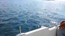 Lüfer Avı  Balık Avları 