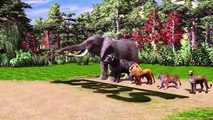 Wild Animals Race - Lion, Tiger, Cheetah, Buffalo and Elephant Race for Kids  Jungle Animals Race
