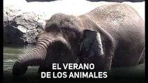 Elefantes, nutrias y osos: ¡agua fría para todos!