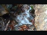Bruit de l'eau qui coule : L'eau c'est la Vie – Calme Rivière Nature Haute Montagne Zen - Vlog