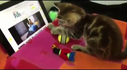 CUTE & AWESOME CATS 6