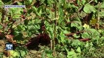 Avec la chaleur, comment préserver ses plantes?