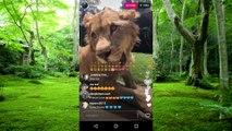 Leão dentro de casa - leão domado