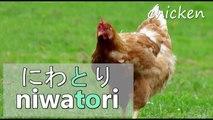 Anglais intégré Japonais Apprendre leçon ne dans aucun Sous vocabulaire mots 1000 1 version