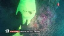 Environnement : une association se bat contre les filets de pêche fantômes