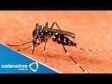 Alerta sanitaria por dengue en Aguascalientes / Brote de dengue en Aguascalientes