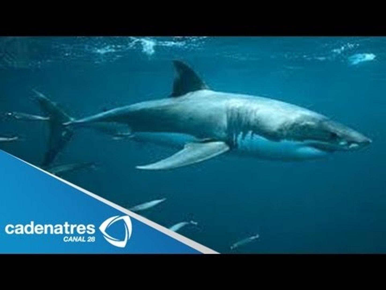 Isla Guadalupe, un encuentro con el tiburón Blanco / Tiburón Blanco