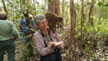 Feeding a Brown Lemur on Lemur Island in Madagascar