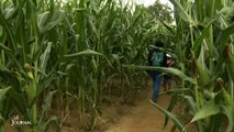 Loisir: Sortir d'un labyrinthe de maïs grâce au Vendée Globe
