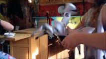 Aventures heure enfants la magie Magie mon animal de compagnie vidéos avec Robot morphle une compilation de morphle