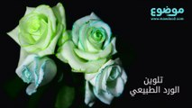 طريقة تلوين الورد الطبيعي