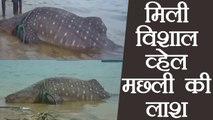 Tamil Nadu :  Dead body of 18-feet long whale found in Rameswaram | वनइंडिया हिंदी