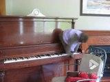 Juste un singe.. qui joue du piano !! Comme les aristochats !