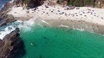 Une baleine grise nage à quelques mètres des baigneurs... sans qu'ils la remarquent !