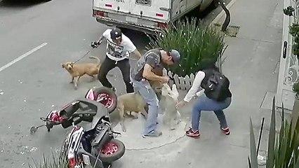 Owner Defends His Dog Against Violent Attack
