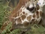 ANIMAL PLANET - THE MOST EXTREME:  GARDENERS - Discovery Animals Nature (full documentary episode)