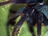 ANIMAL PLANET - THE MOST EXTREME:  LIVING DEAD - Discovery Animals Nature (full documentary episode)
