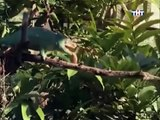 ANIMAL PLANET - THE MOST EXTREME:  APPENDAGES - Discovery Animals Nature (full documentary episode)