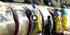 سمندر کی رانی وہیل مچھلی کو جب پکڑ کر اس کا پیٹ کھولا گیا تو دیکھیں کیا کیا نکلا ایسی نایاب چیزیں جو اپ نے نہیں دیکھی ہوں گی مکمل ویڈیو دیکھیں
