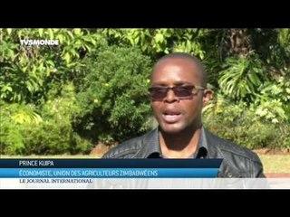 Zimbabwe : protectionnisme et récolte de maïs record