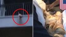 バルコニーから落ちた犬を、シーツ広げてキャッチ 米