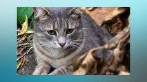 Soñar Con Gatos Grises   ¿Qué Significa Soñar Con Gatos Grises