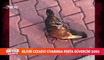 Silivri Cezaevi civarında ''Posta Güvercini'' şoku