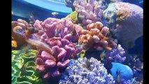 Bangkok, SEAHORSES, Siam Ocean World Aquarium, Siam Paragon, Thailand