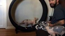 Entraînez votre chat au sprint : une roue et un laser  LOL !! BOLT !