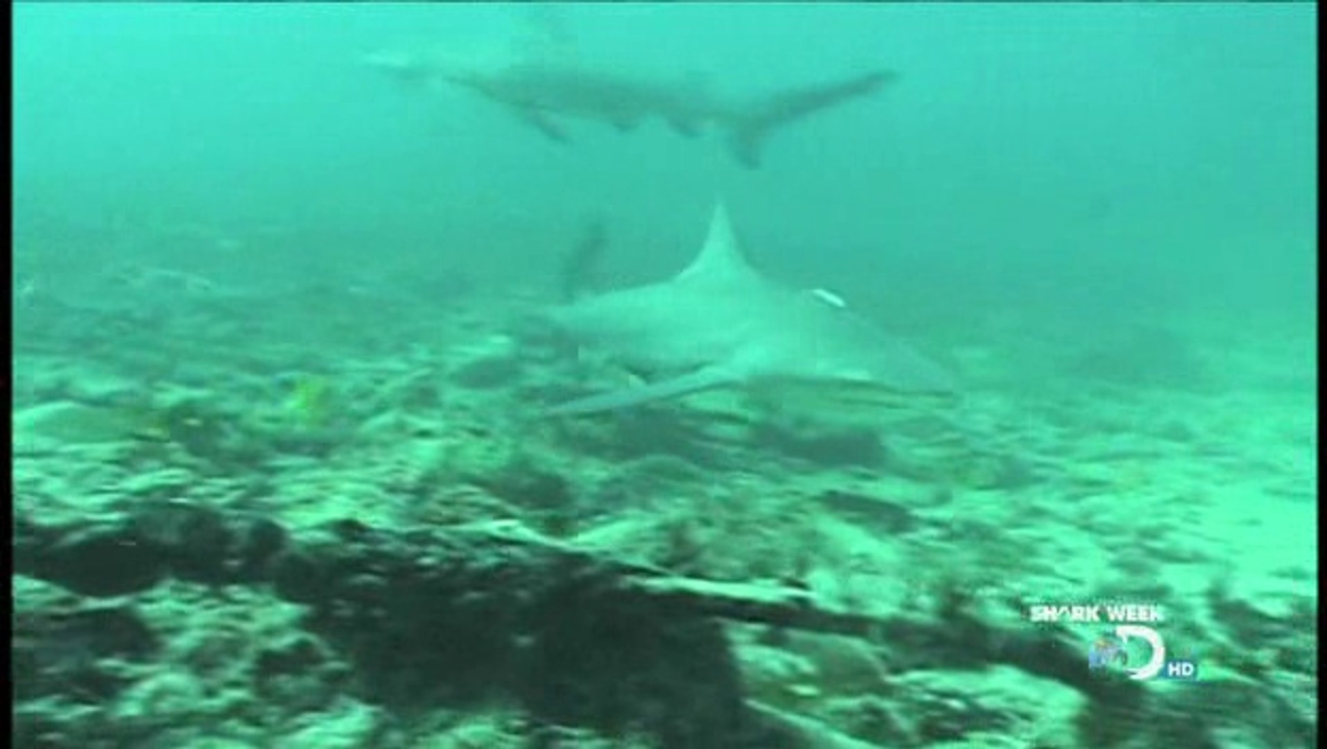 SHARK WEEK - DAY OF THE SHARK - Discovery Channel - Sharks Animals Nature  (documentary)
