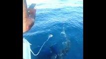 Un gros requin aperçu au large de Marseille
