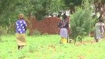Afrique, AMÉLIORATION LA PRODUCTIVITÉ AGRICOLE