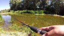 Pêche du petit brochet au leurre dans les troues de Loire| GoPro HD