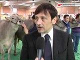 TG 24.04.12 Mostra bovina di Martina Franca, zootecnia pugliese prima al sud