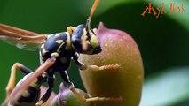 Dans le plupart plupart 5 insectes dangereux insectes dangereux pour la paix mondiale